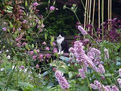 Cat enjoying the Spring flowers