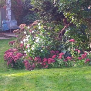 Late Autumn colour; deep pink sedums and white pom pom dahlia flowers