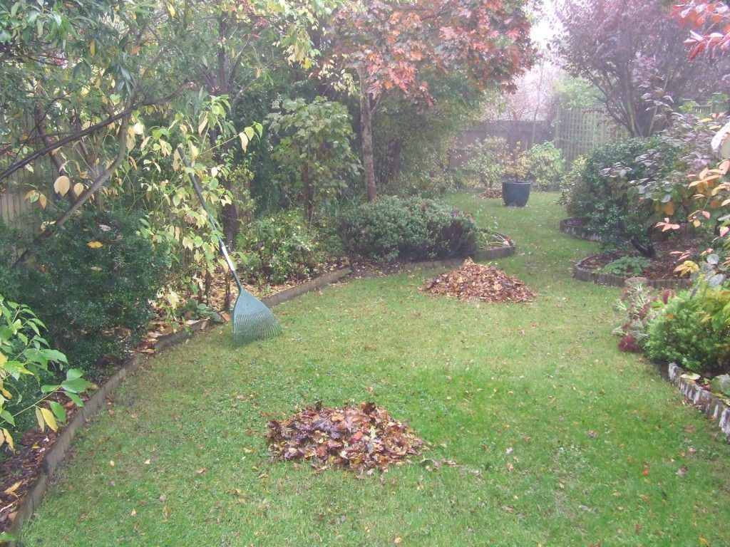 Piles of raked leaves ready for collection